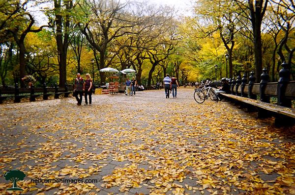 Central Park - New York City