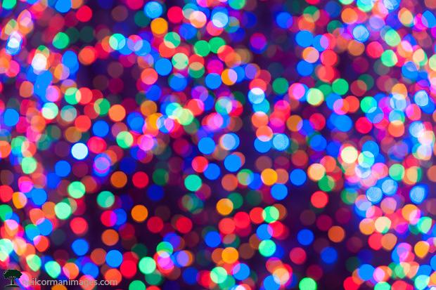 Christmas Lights in Boise