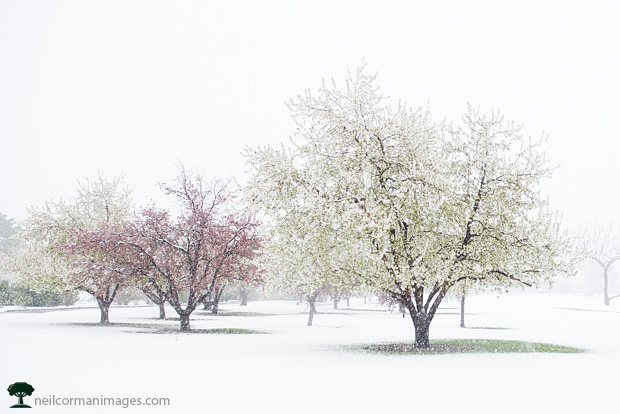 Trees with Spring Colors at City Park Denver