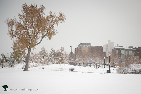 Denver Commons Park with Snow