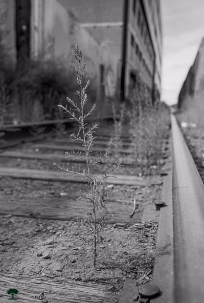 Denver Train Track