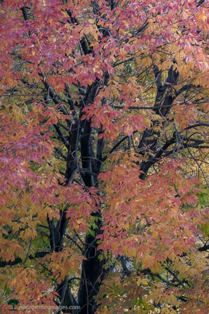 Fall Tree in City Park - Denver