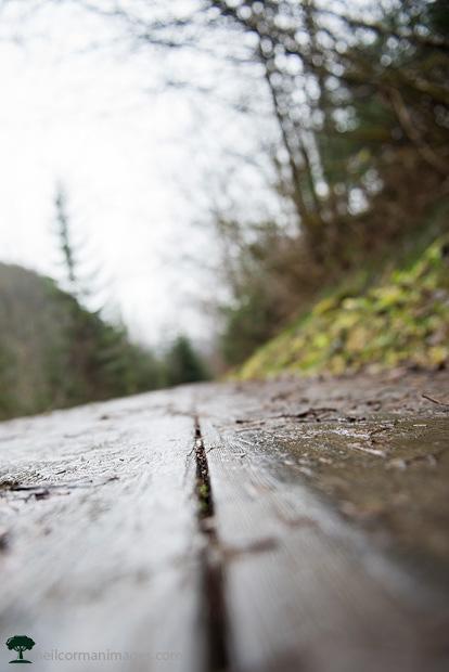 Flume Trail in Juneau