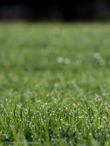 Morning Dew on the Grass