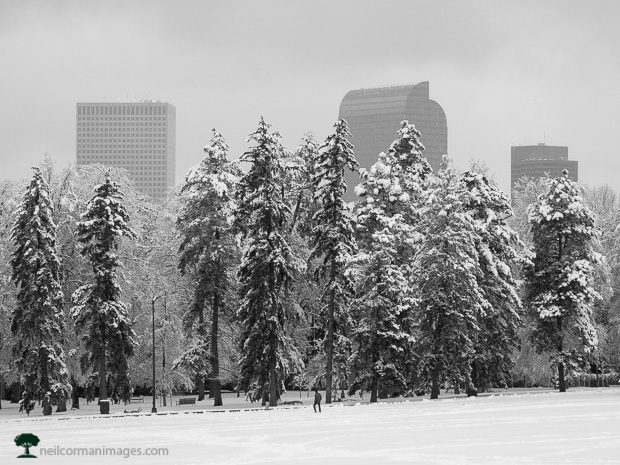 Growing City of Denver in the Snow