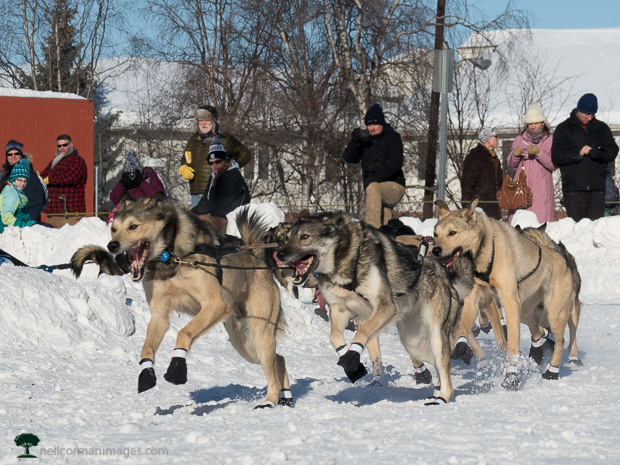 Ceremonial Start of Iditarod 2017
