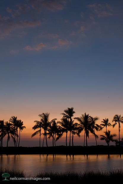 Sunset in Kona, Hawaii with Palm Trees
