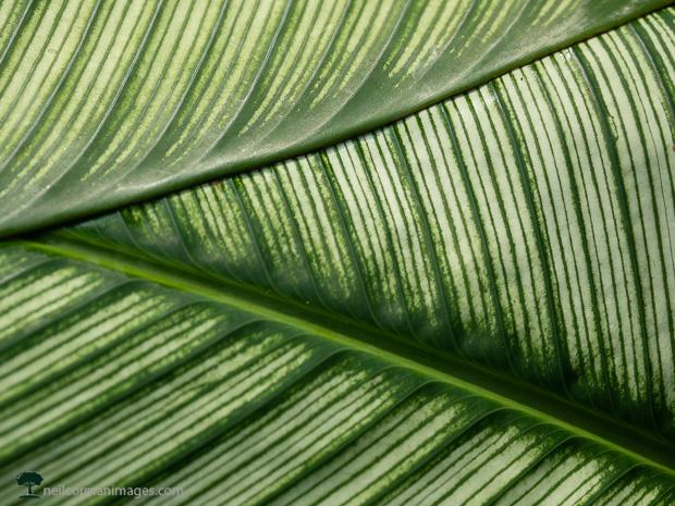 Leaf in Singapore