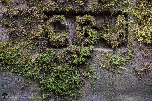 Moss in Juneau