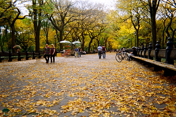 Fall in Central Park in New York City