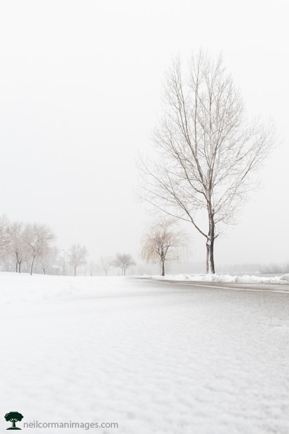 Path at Sloans Lake in Denver during snowstorm