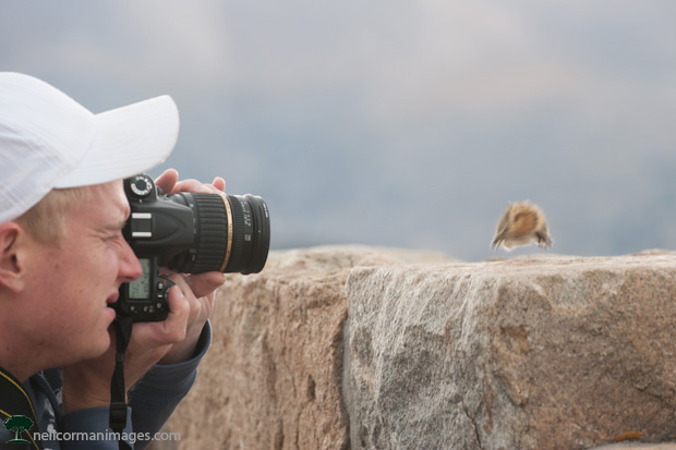 Photographing Wildlife in the Park