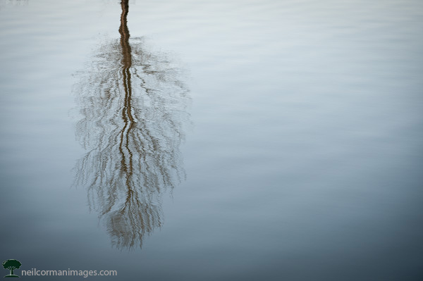 Reflection of a Tree on a Lake