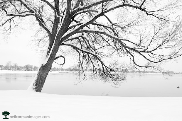 Tree in the Winter at Sloans Lake