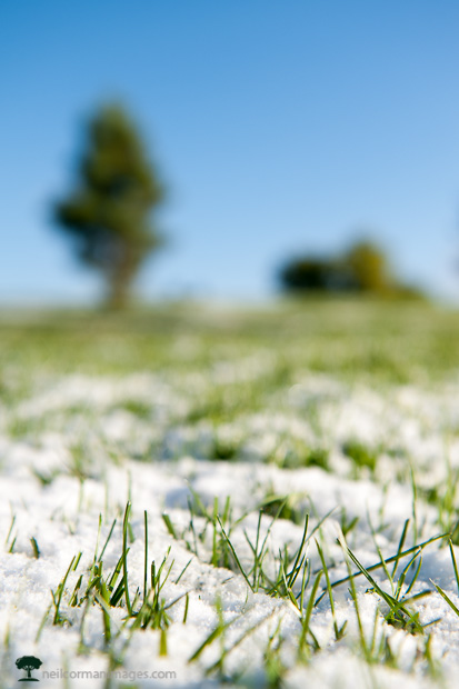 Spring Snow in the Grass at Sloans Lake