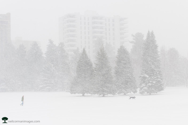 Snowy Day in Cheesman Park - Denver