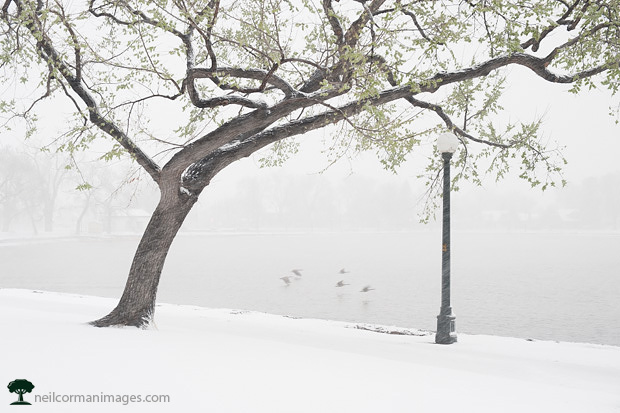 Snowy April Day - Washington Park Denver