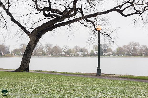 Snowy May Day in Denver