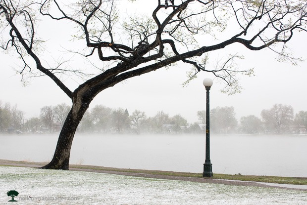 Snowy May Day - Washington Park Denver