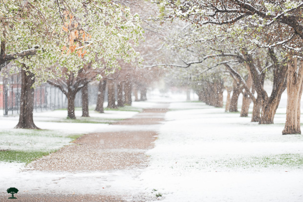 Snowy Path to City Park in Denver