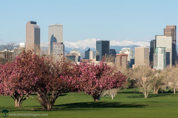 Denver Skyline in Spring