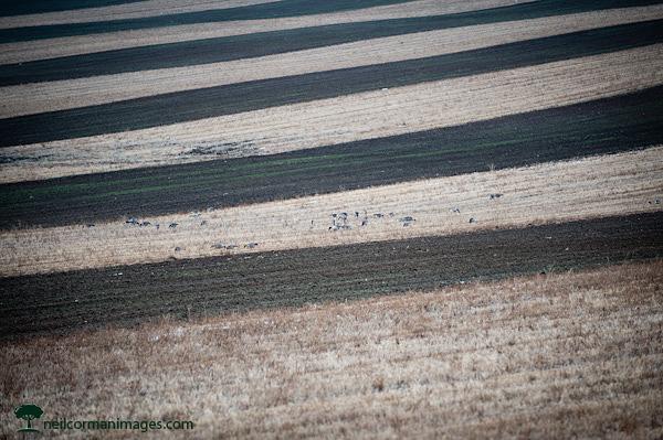 Suburban Farming near Denver, Colorado