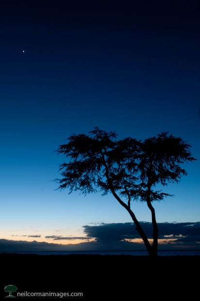 Sunset in Maui with Tree