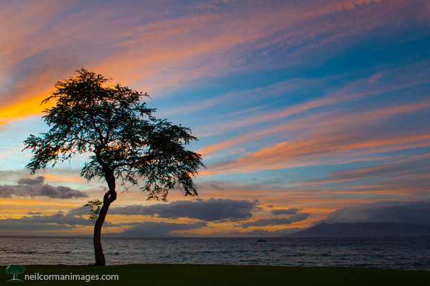 Sunset in Maui Hawaii with Tree