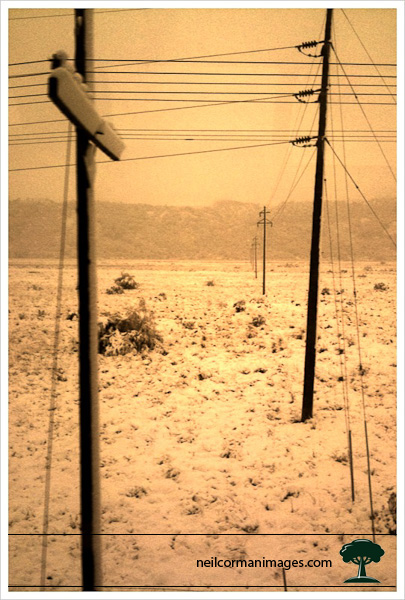Telephone Poles in Snow