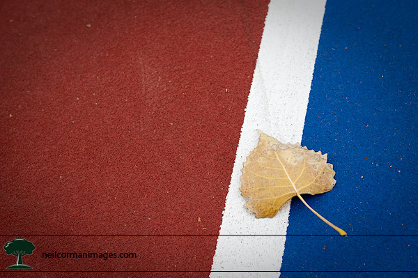 Tennis Court and Leaf