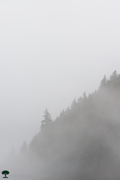 Tree in the Fog in Juneau