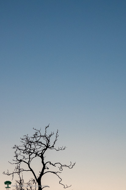 Tree against the Evening Sky