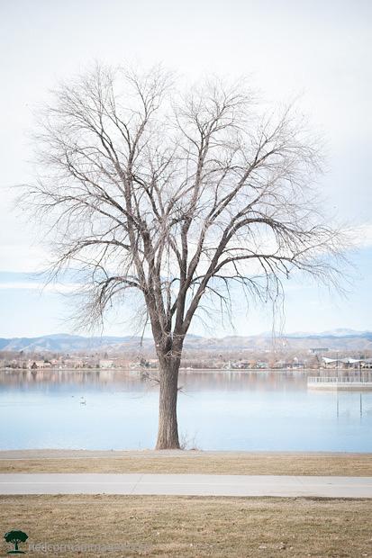 Tree a Sloans Lake in Denver