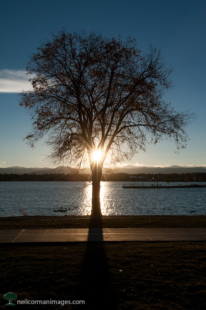 Sun through a Tree at Sloans Lake