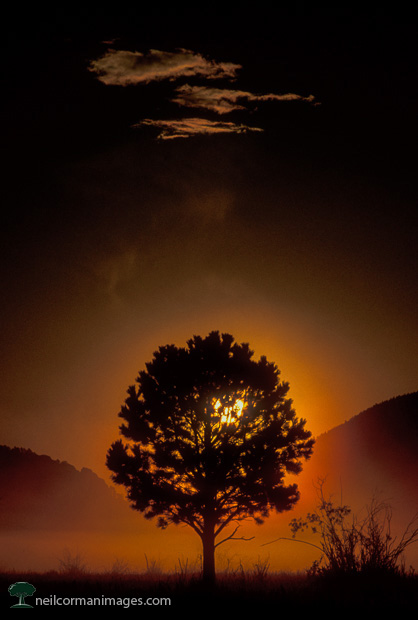 Sunrise through a Tree in Rocky Mountain National Park