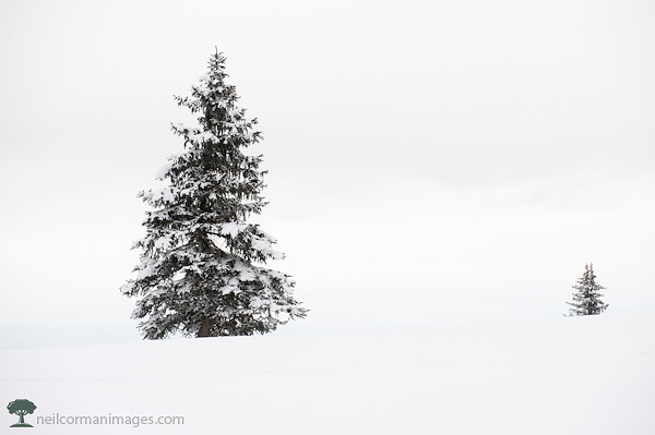 Tree in Colorado Snow Holiday Card