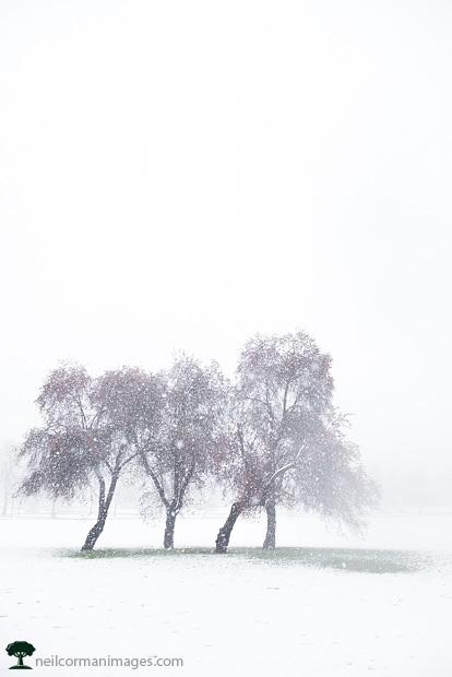 Trees in Colorado Spring Snow at City Park