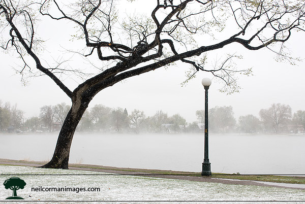 Snowy May Day - Washington Park, Denver