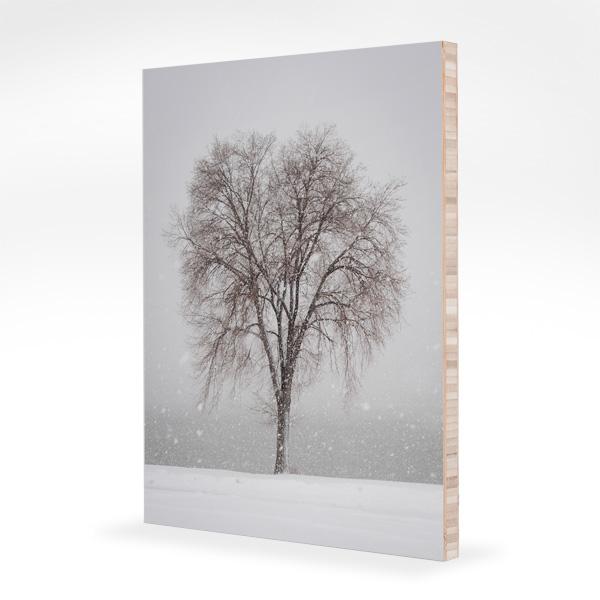 Tree in Colorado Snow
